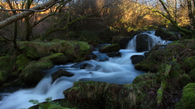 time-lapse flowing stream in evening sunlight, static shot. long exposures on water - stream stock videos & royalty-free footage
