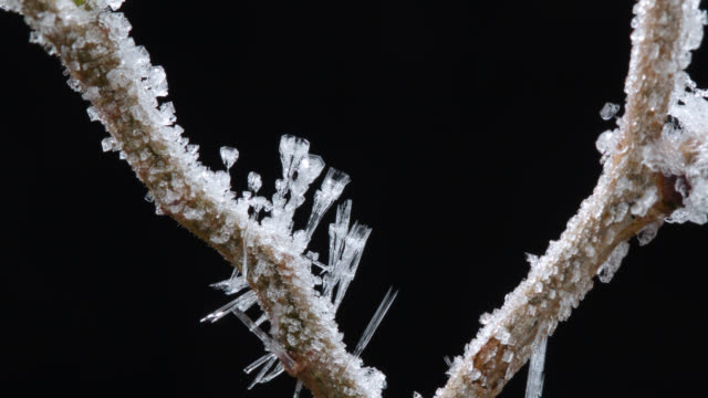 Timelapse frost forms on plant twigs overnight, UK