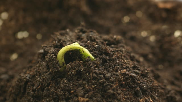 time-lapse, germinating plant - plant stem stock videos & royalty-free footage