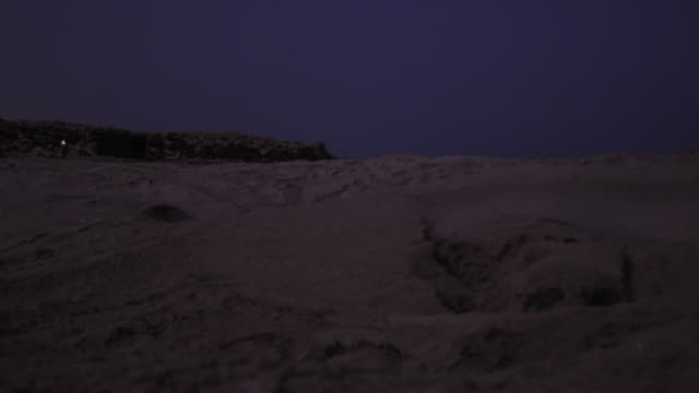 Timelapse green sea turtle (Chelonia mydas) digs nest on beach at night, Oman
