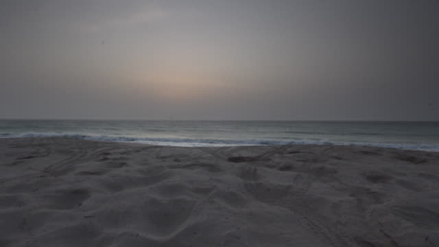 timelapse green sea turtles (chelonia mydas) on nesting beach at sunrise, oman - green turtle stock videos and b-roll footage