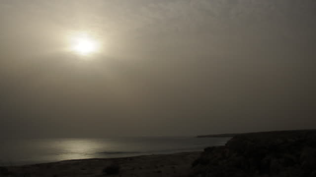 Timelapse green sea turtles (Chelonia mydas) on nesting beach at sunrise, Oman