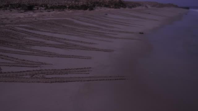 timelapse green sea turtles (chelonia mydas) on nesting beach at sunrise, oman - green turtle stock videos & royalty-free footage
