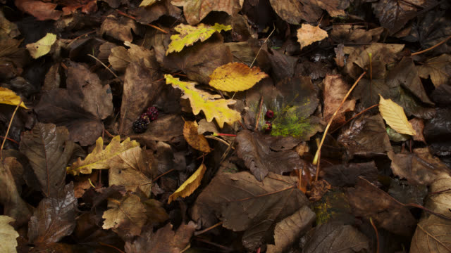 vídeos de stock, filmes e b-roll de timelapse invertebrates amongst decomposing leaf litter in autumn, uk - apodrecendo