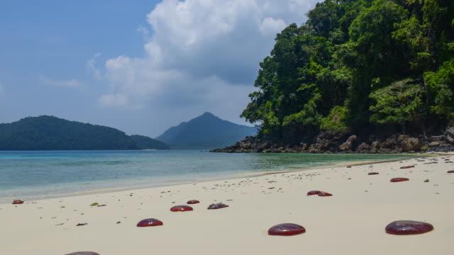 Zeitraffer: Quallen am Strand NyaungOoPhee Insel, Myanmar
