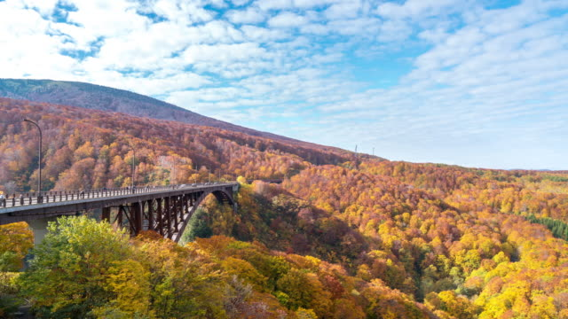 time-lapse: jogakura bridge at hakkoda red leave forest, aomori japan - autumn leaf color stock videos and b-roll footage