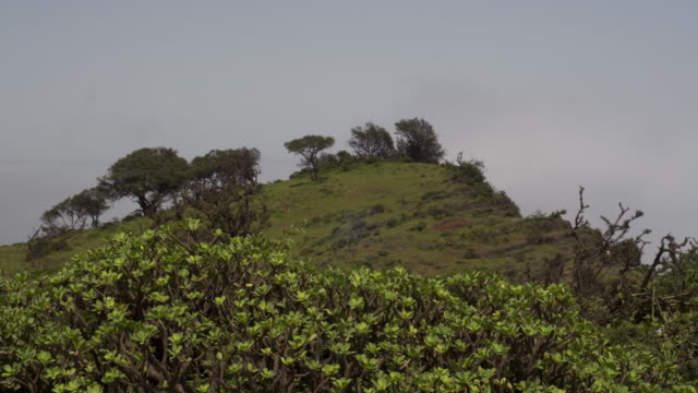 Timelapse Khareef monsoon mist drifts over mountains, Oman