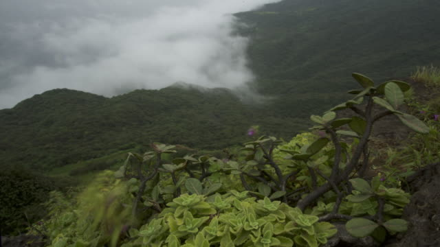 timelapse khareef monsoon mist swirls over mountainous coast, oman - monsoon stock videos and b-roll footage