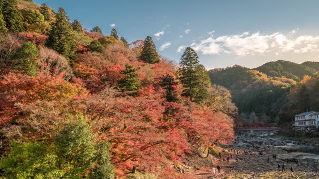 zeitraffer: korankei waldpark mit herbst rot verlassen nagoya japan - ginkgobaum stock-videos und b-roll-filmmaterial