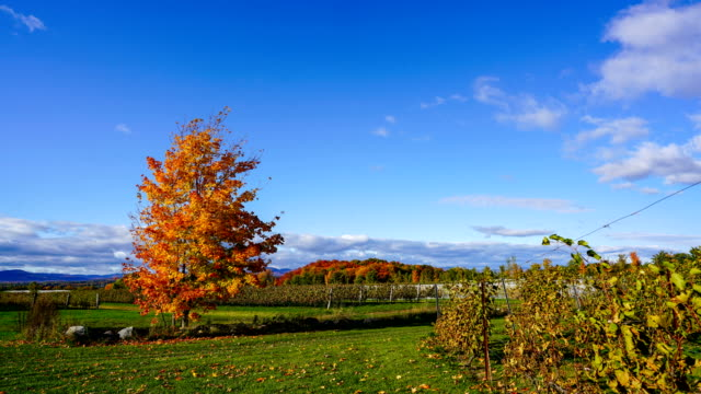 time-lapse :landscape view of farm in ile d'orleans, quebec, canada - open field stock videos & royalty-free footage