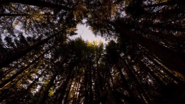 タイムラプス夜木下から見上げる - シュバルツバルト点の映像素材/bロール