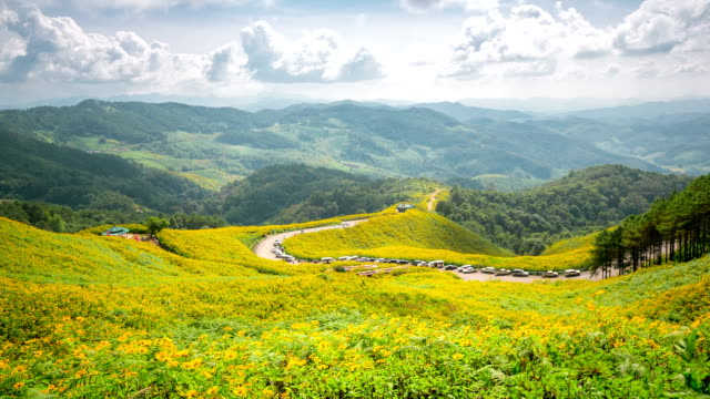 stockvideo's en b-roll-footage met hd time-lapse: mexican sunflower field at mae hong son thailand - hd format
