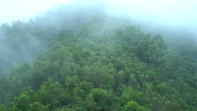 4 k 撮影した雲と霧に覆われた山 - 松の木点の映像素材/bロール