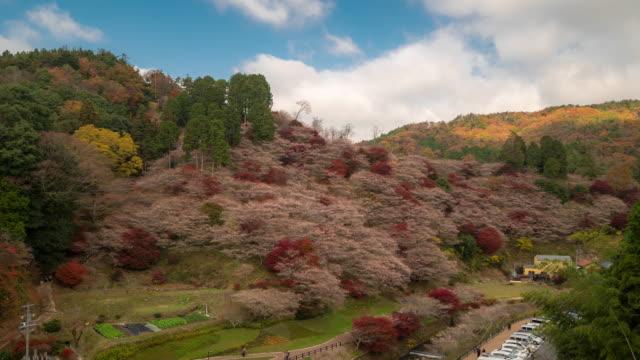 vídeos de stock e filmes b-roll de time-lapse: obara sakura with autumn red leave toyota nagoya japan - ácer
