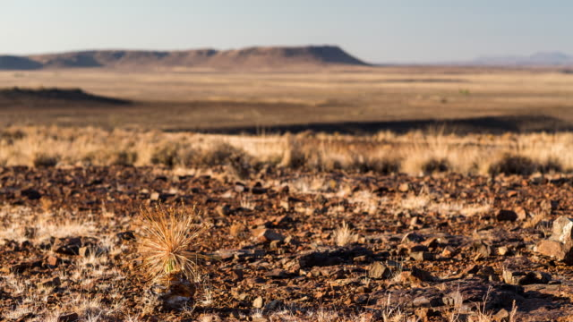 timelapse of a bushman poison plant and a karoo landscape after sunrise - karoo video stock e b–roll