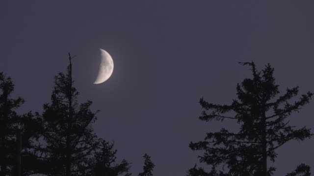 timelapse of a crescent moon over the black forest - half moon stock videos & royalty-free footage