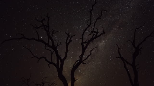 Timelapse of a dry Leadwood Tree as it becomes silhouetted against the night sky during sunset