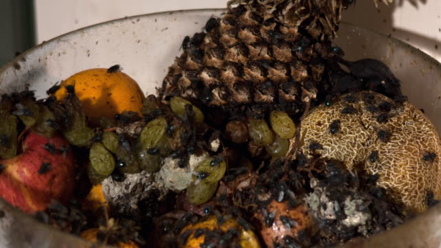 vidéos et rushes de time-lapse of a fruit bowl filled with decaying fruit covered in blowflies - coupe à fruits