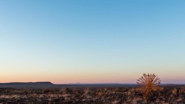 timelapse of a gifbol bushman poison plant at sunrise with golden light in a karoo landscape - karoo video stock e b–roll