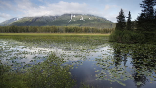 time-lapse of a pond going between the seasons, chugach national forest, alaska. - chugach national forest stock videos & royalty-free footage