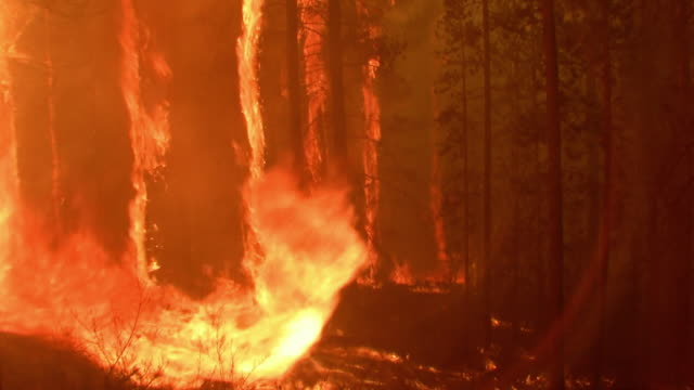 Timelapse of a wildfire raging through a forest