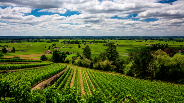 timelapse of beautiful clouds over the vineyard. bordeaux, france - rustic stock videos & royalty-free footage