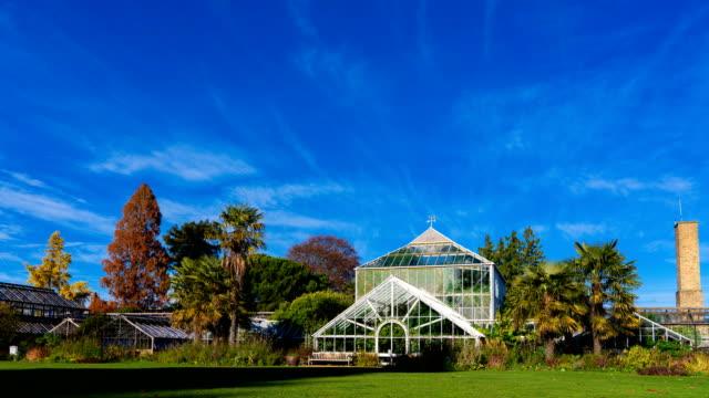 timelapse of botanic glasshouse in cambridge university botanic garden, uk - garden centre stock videos & royalty-free footage