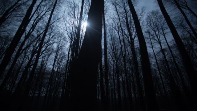 zeitraffer der wolken über blattlosen bäume in der dämmerung - einfachheit stock-videos und b-roll-filmmaterial