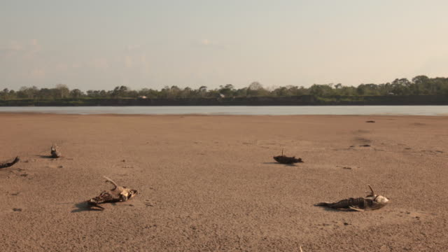 Timelapse of dead sharks scattered across Colombian river bank