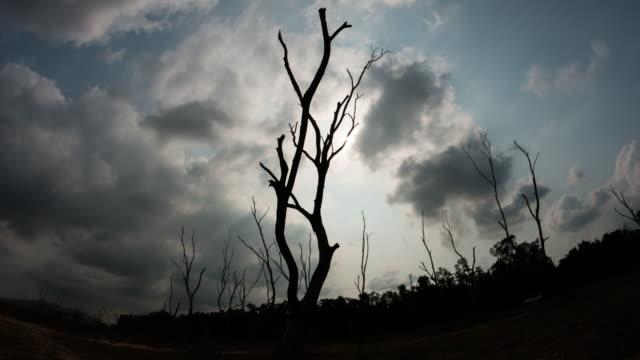 timelapse von toten bäumen - ast pflanzenbestandteil stock-videos und b-roll-filmmaterial