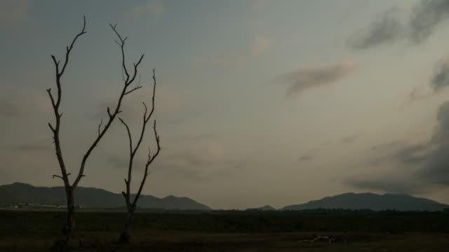 Timelapse von Toten Bäumen
