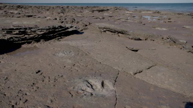vídeos y material grabado en eventos de stock de timelapse of dinosaur tracks with tide out to tide coming up over tracks - pisada