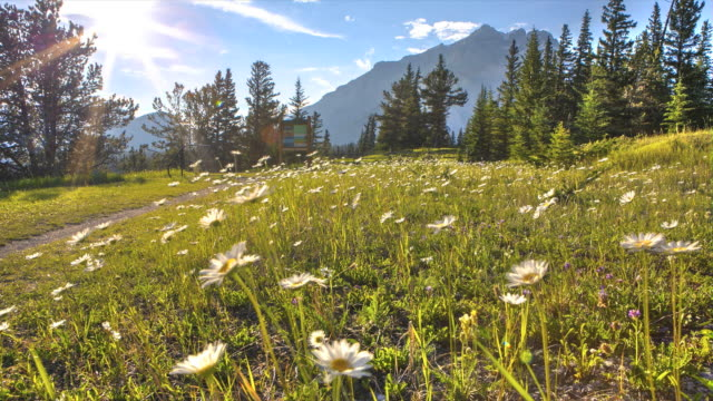 Time-Lapse of flowery alpine meadow