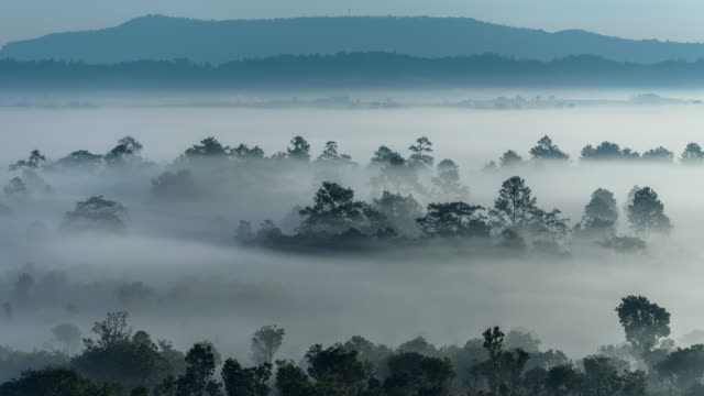 Timelapse of flowing mist at Thung Salaeng Luang National Park