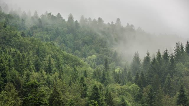 霧山の風景以上の圧延のタイムラプス - シュバルツバルト点の映像素材/bロール