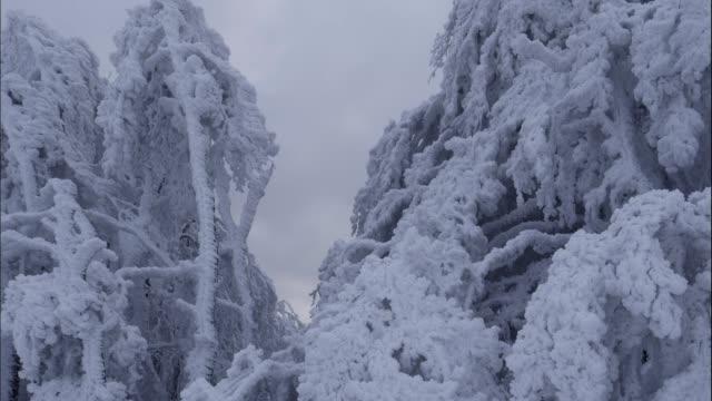 stockvideo's en b-roll-footage met timelapse van bevroren boomtakken, extreem koude tempertures, prachtige vormen en vormen, pinnen, gebogen over bomen, bevriezing bewolking - twijg