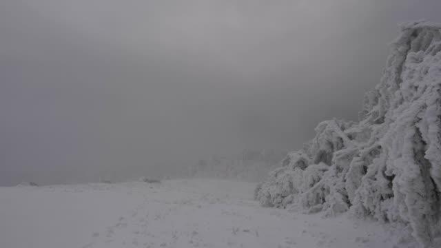 stockvideo's en b-roll-footage met timelapse van bevroren bomen, extreem koude tempertures, prachtige vormen en vormen over de takken, bevriezing van de pinnen, gebogen over bomen, bewolkt en bewegende wolken - twijg