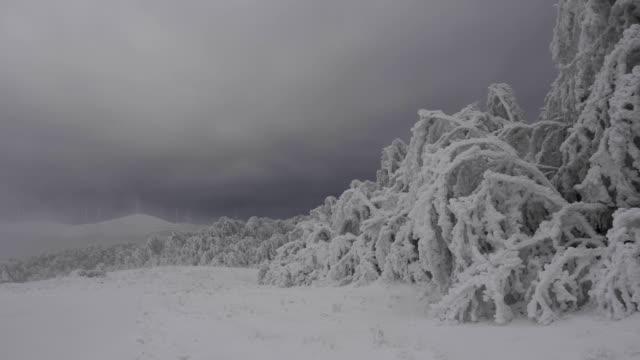 zeitraffer von gefrorenen bäumen, extrem kalten tempertures, schönen formen und formen über die zweige einfrieren stifte, beugte sich über bäume, bedecktem himmel und ziehenden wolken - zweig stock-videos und b-roll-filmmaterial