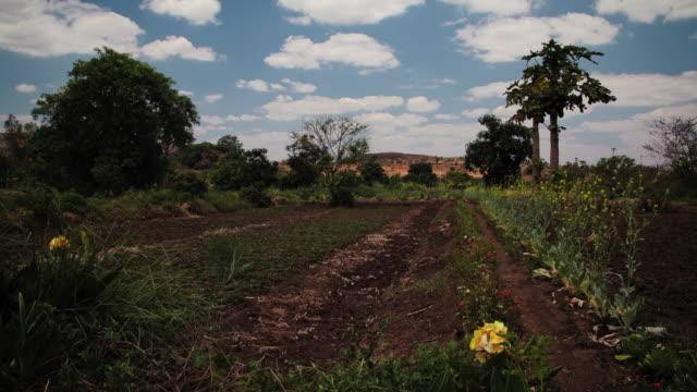 vídeos de stock e filmes b-roll de timelapse of garden - malávi