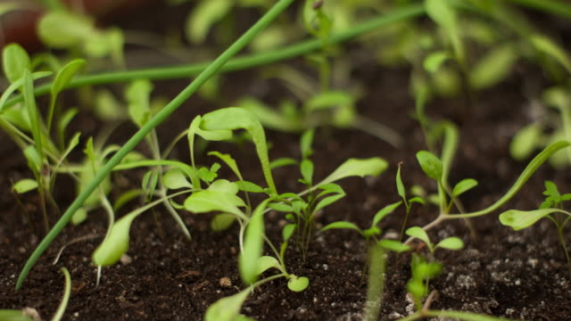 time-lapse of germinating various plants - crop plant stock videos & royalty-free footage