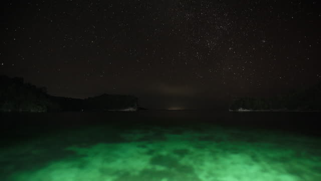 time-lapse of green coral reef at night