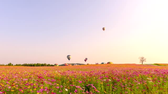 time-lapse of hot air balloons flying on cosmos field - meadow stock videos & royalty-free footage