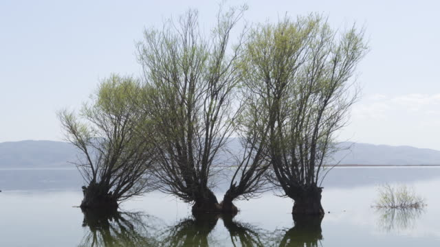 time-lapse of lake and trees - backwater stock videos & royalty-free footage
