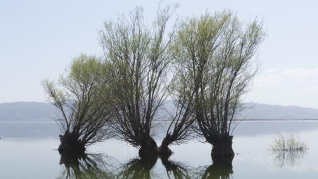 vidéos et rushes de time-lapse du lac et palmiers - bras mort de cours d'eau