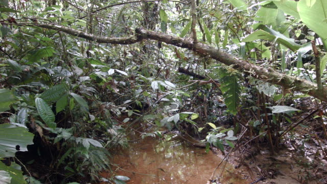 time-lapse of leaf cutter ants (atta sp.) walking along a branch above a rainforest stream in the ecuadorian amazon. - ant stock videos and b-roll footage
