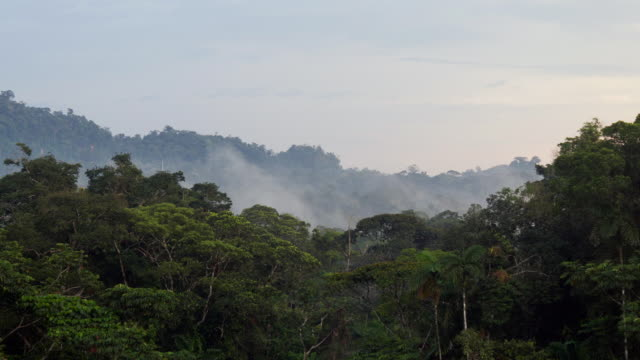 time-lapse of mist blowing over the rainforest canopy at dusk - south america stock videos & royalty-free footage