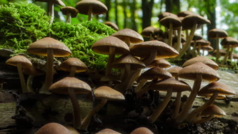 timelapse of mushrooms growing on old tree trunk - pilz stock-videos und b-roll-filmmaterial