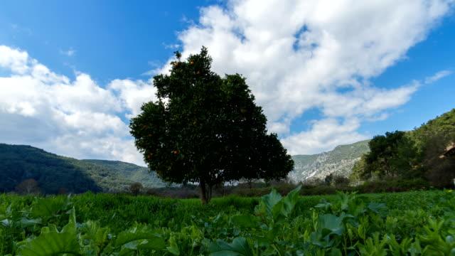 曇り空の下のオレンジの木の 4 k タイムラプス - 一つ点の映像素材/bロール