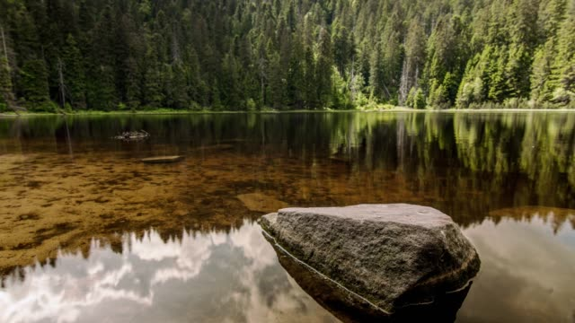 timelapse of pond in forest - baden wurttemberg stock videos and b-roll footage
