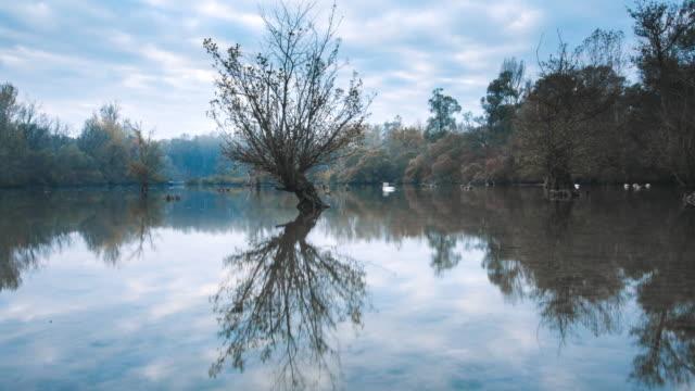 vídeos de stock, filmes e b-roll de timelapse do rio durante a queda, água lisa e as folhas coloridas - grupo médio de animais